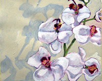 Polly Jackson - White Orchids